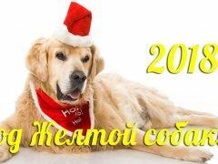 Гороскоп на 2018-й год Собаки